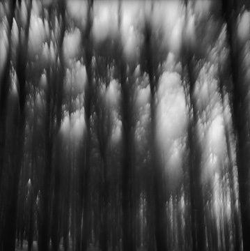 fantasy forest tops. frank dituri