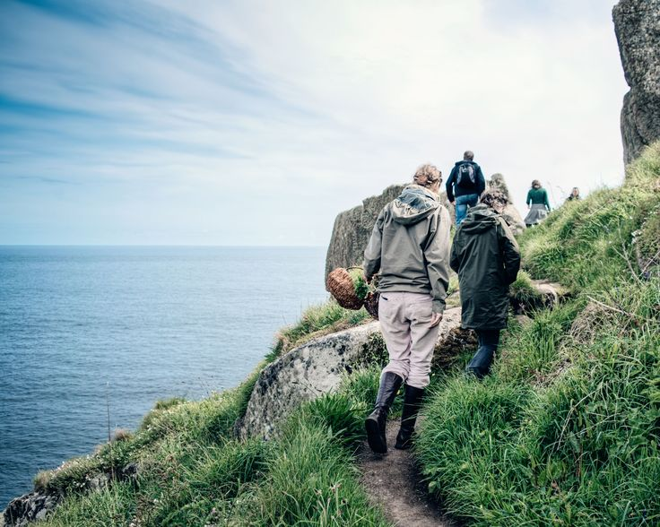 Foraging on the Cornish Costal path.