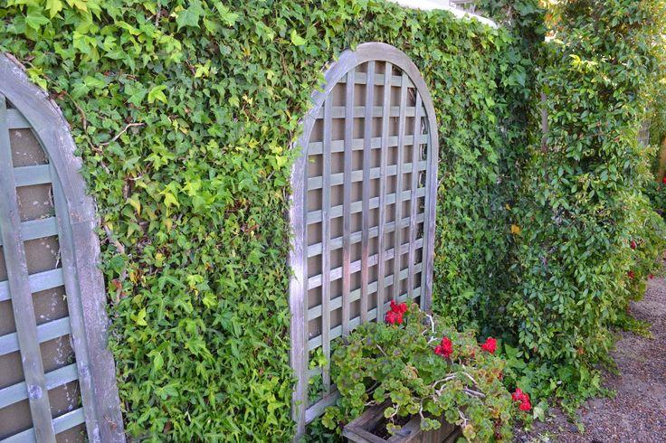 Lattice And Ivy Dividing Quot Fence Quot Landscape Garden Inspiration Pinterest Home Photo