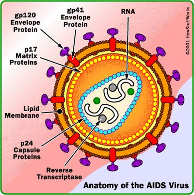 Definition for AIDS and HIV AIDS = Acquired Immunodeficiency Defence Syndrome HIV = Human Immunodeficiency Virus that caused AIDS and a...