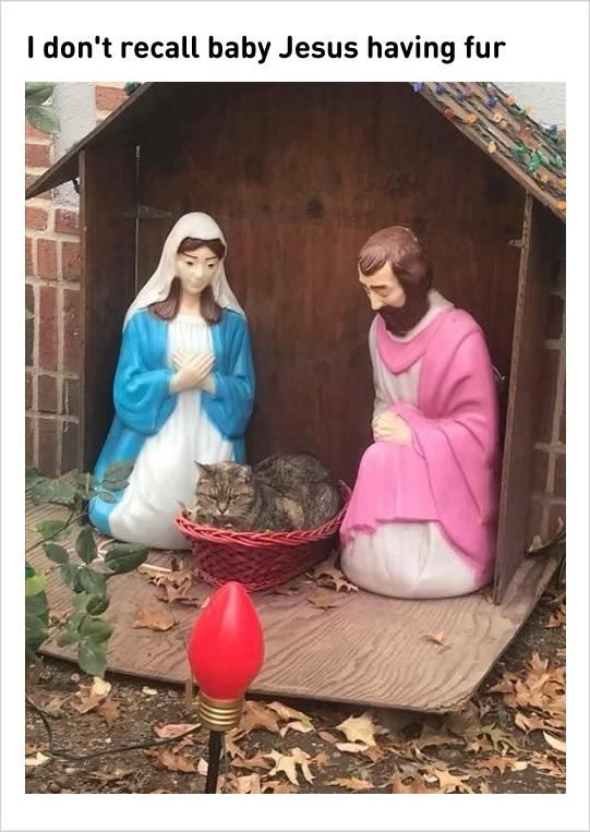 Holy infant so tender and meowld