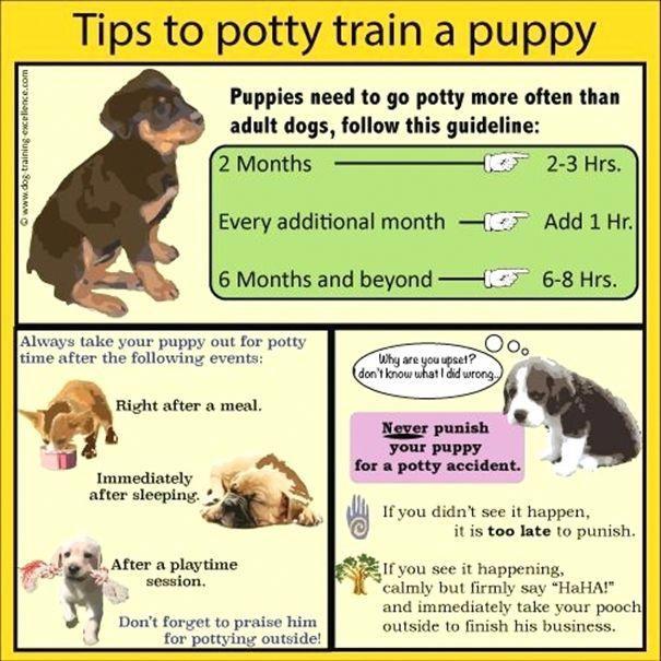 Dog Training Jumping Up On Counters K9 Basics Dog Training