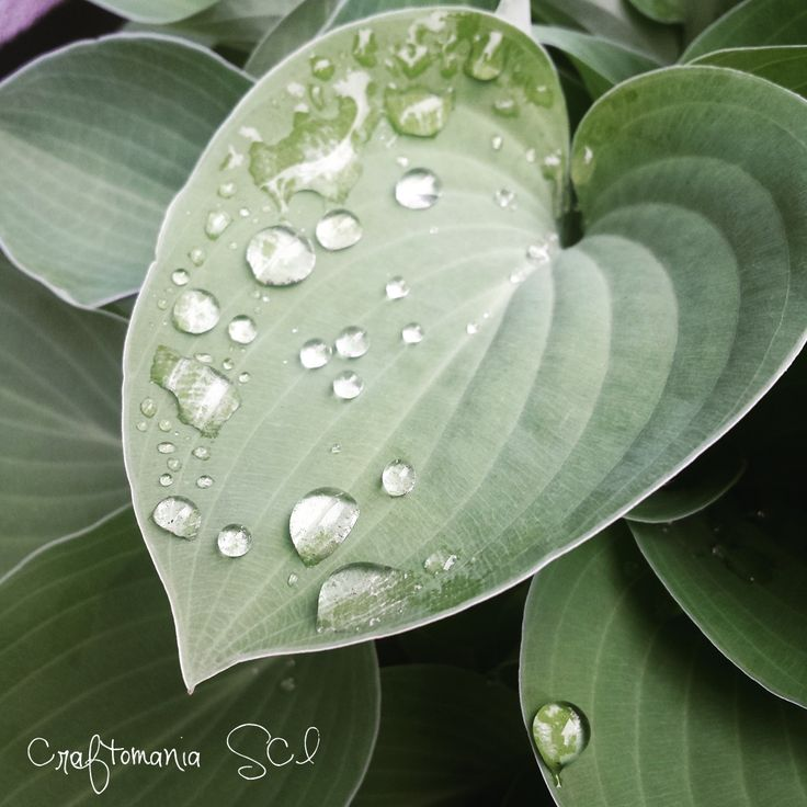 #garden #drops #green