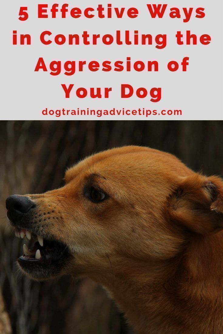 5 Effective Ways In Controlling The Aggression Of Your Dog