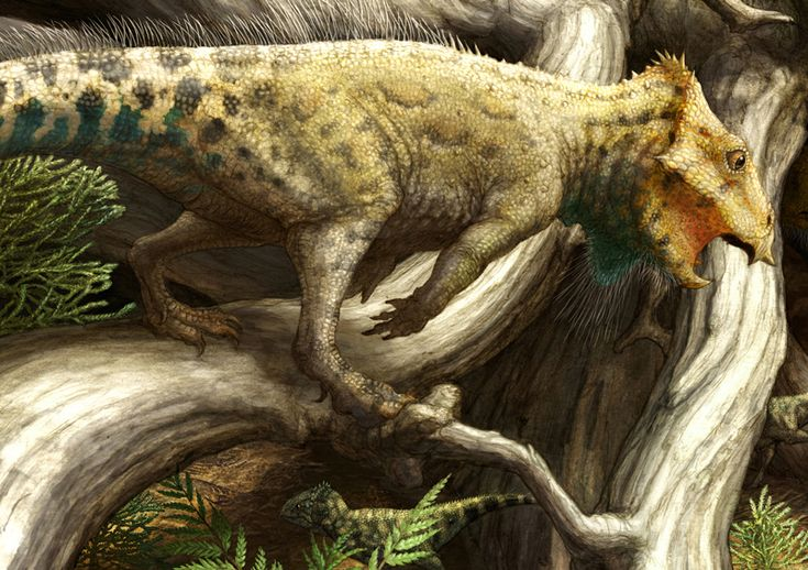 A dinosaur fossil discovered in Montana tells the deeper story of horned dinosaurs in North America.