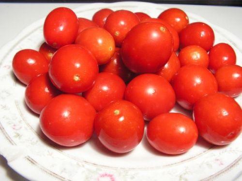 Dietskij Sładkij Pomidor niski - ok.50cm. Do uprawy w gruncie i pod folią. U mnie zdecydowanie lepiej czuł się w foliaku. Jak już pisałem pomidor wczesny, owocował jako pierwszy z moich, po 56 dniach od wysadzenia. Ale faktem jest, że w tym roku opóźnione było u mnie wysadzanie o trzy tygodnie tj poszły pomidory pod folię ok.20 maja. Pierwsze Dietskie z krzaka zdjąłem 16 lipca. Plonuje bardzo obficie, już bez przerwy przez dwa miesiące. Wymaga podpierania. Wrażliwy na niedobory magnezu…
