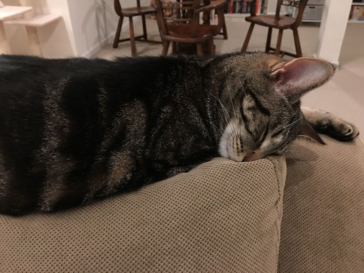 He could lift his face off the couch but why bother? Tags