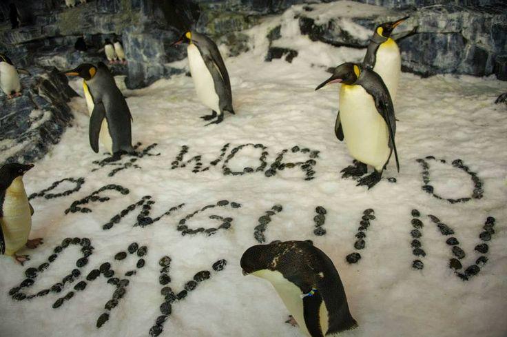 April 25 - World Penguin Day