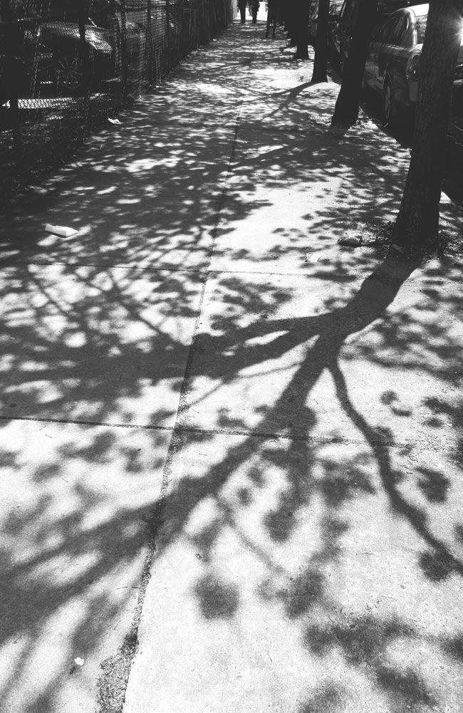 dappled pavements