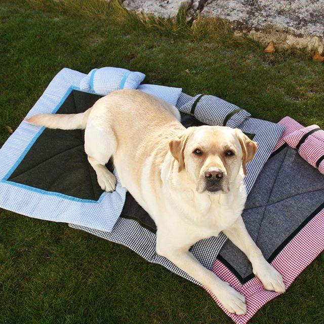 myLumpi Hund Anakin kann sich garnicht entscheiden: Unsere Hundedecken gibt es in so vielen Farben und Mustern! Natürlich auch in den Größen S, M und L damit euer Wuffi sich nicht über drei Decken breit machen muss. #labrador #hund #hunde #welpe #welpen #hundedecke #hundebett #liegedecke #design #style #hundeaccessoire #homedesign #outdoor #mylumpi https://www.instagram.com/p/BEdTo8bkOyD/