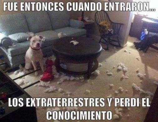 Imagenes de perros con mensajes graciosos