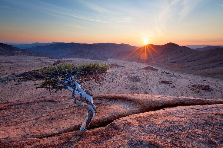 RICHTERSVELD DAWN, Richtersveld National Park, Northern Cape, South Africa. The flaming Namibian sun rises beyond the Orange River to cast first light on Kokerboom kloof in the Richtersveld.