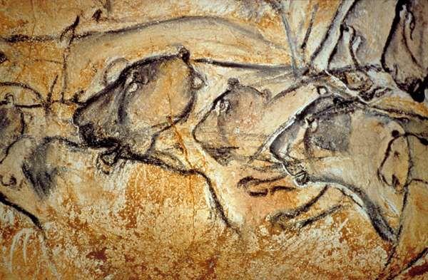 L'une des multiples scènes peintes sur les parois de la grotte de Chauvet-Pont d'Arc : des grands lions des cavernes à la chasse. © DRAC Rhône-Alpes/Ministère de la Culture et de la communication