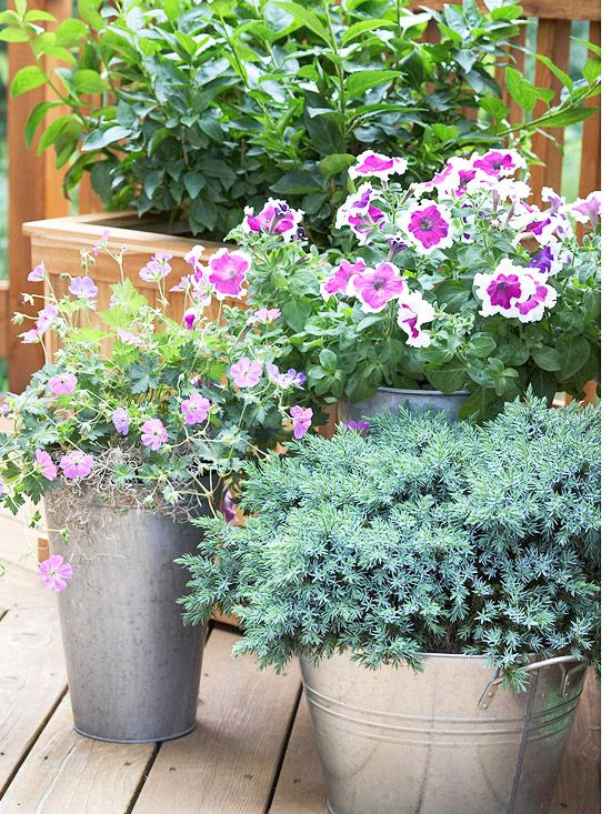 Galvanized tubs as planters.