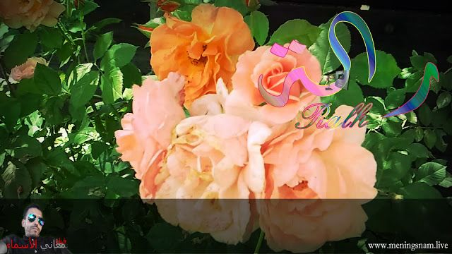 معنى اسم رالة معنى اسم رالة وصفات حاملة هذا الاسم Ralh م ر ح ب ا ب ك م ف ي مدونة م ع ان ي ال أ س م اء ال ي و م س و ف Flowers Rose Plants
