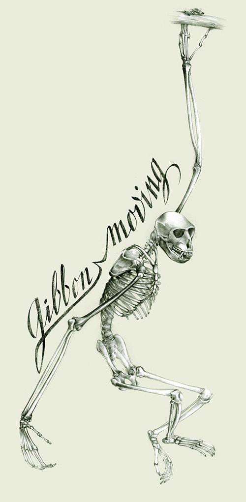 skeleton monkey, dessin squelette gibbon, Florence Gendre