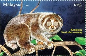 Image detail for -slow loris nycticebus coucang denomination rm3 largely arboreal this ...