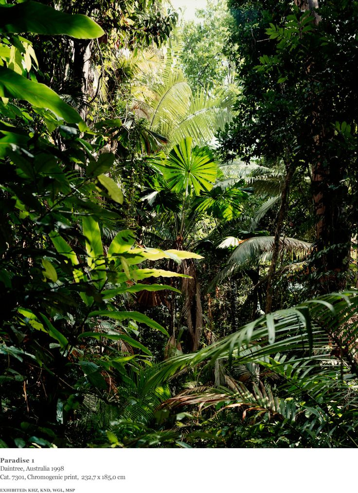 Thomas Struth - Photographs - New Pictures from Paradise