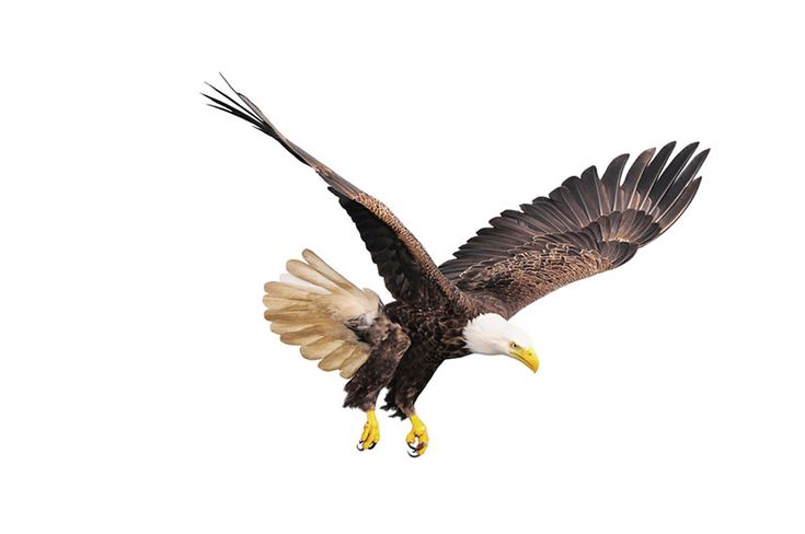 Rebirth Of The Eagle 'Motivational' Message is Fiction, Not Fact