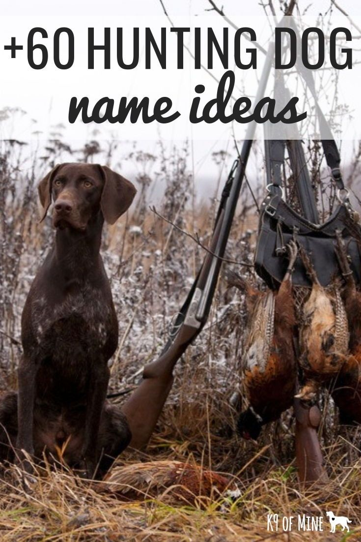 60 Hunting Dog Names Name Ideas For Hunting Hounds Dog Names