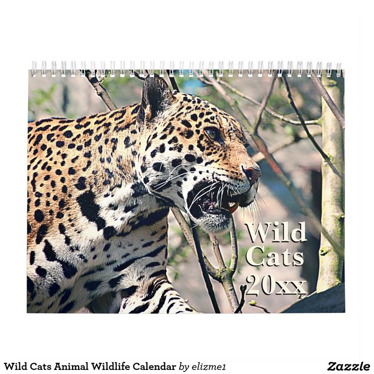 Wild Cats Animal Wildlife Calendar with beautiful graphic images of wild cats.