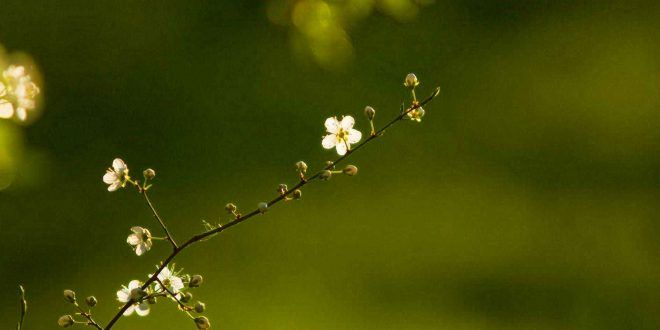 100 Most Beautiful Flower Wallpapers Hd Desktop Free Download Most Beautiful Flowers Flower Wallpaper Beautiful Flowers