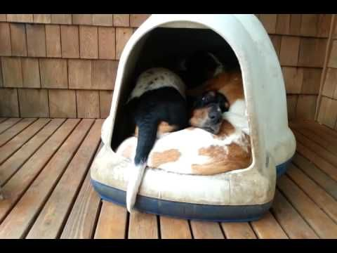 """Check out the full """"clown car"""" in action:   These Basset Hounds Make Up The Cutest Clown Car"""