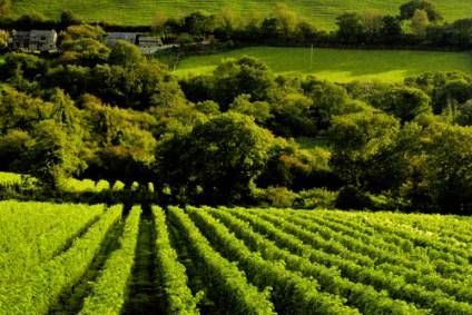 UK wine company Camel Valley has been granted PDO status for its vineyards in the south-west of England.