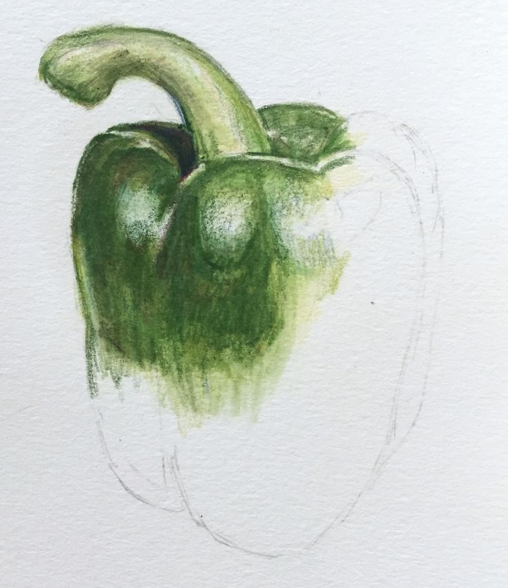 Learn to paint a green pepper in coloured pencils as part of Kate Clarke's still life textures course now available on ArtTutor.
