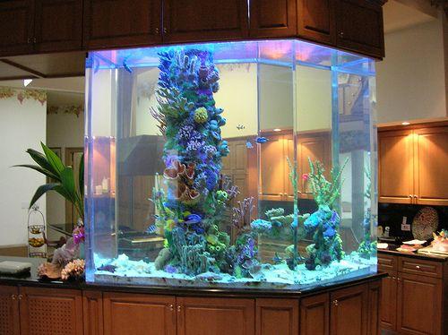 800 gallon Saltwater Aquarium by thefishgallery, via Flickr