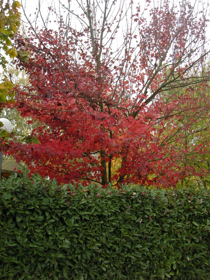 Fall colours by Tacchino Raffaele Vini
