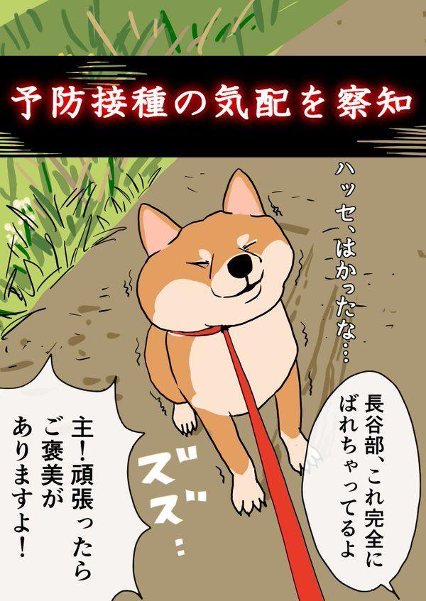 犬審神者本丸、春の風物詩