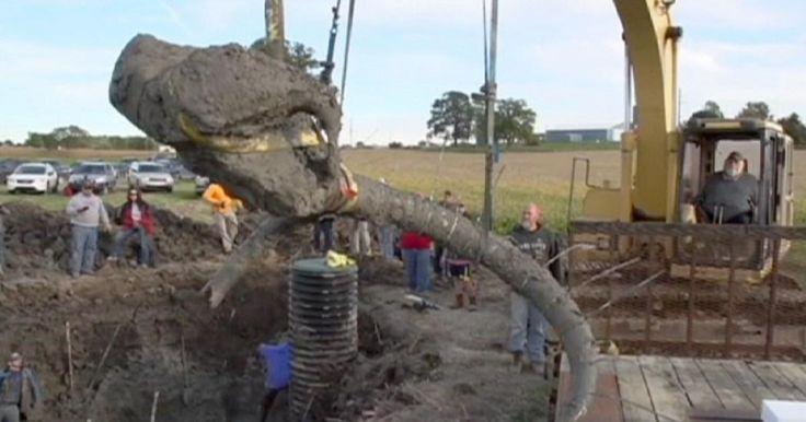 Εin Farmer im US-Bundesstaat Michigan hat die Überreste eines 15.000 Jahre alten Mammuts entdeckt. Wissenschaftler konnten anschließend etwa ein Fünftel des ursprünglichen Skeletts des Tieres rekonstruieren. Die Experten gehen davon aus, dass das Tier an der Stelle von Menschen vergraben worden war, um das Fleisch zu lagern.