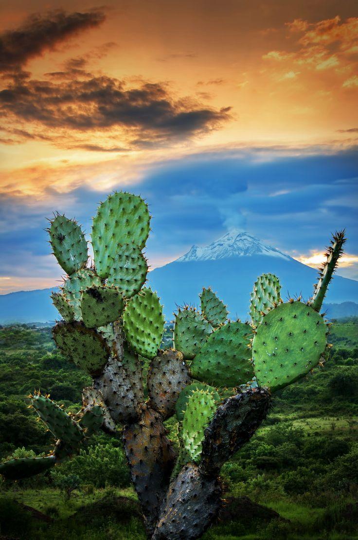 Nopales and the Popocatepetl Volcano, Mexico Mexico Landscape by Carlos Rojas