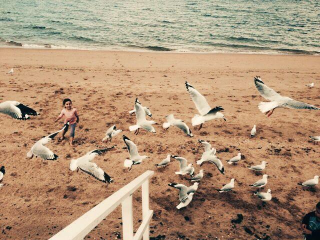Seagulls Margate Beach