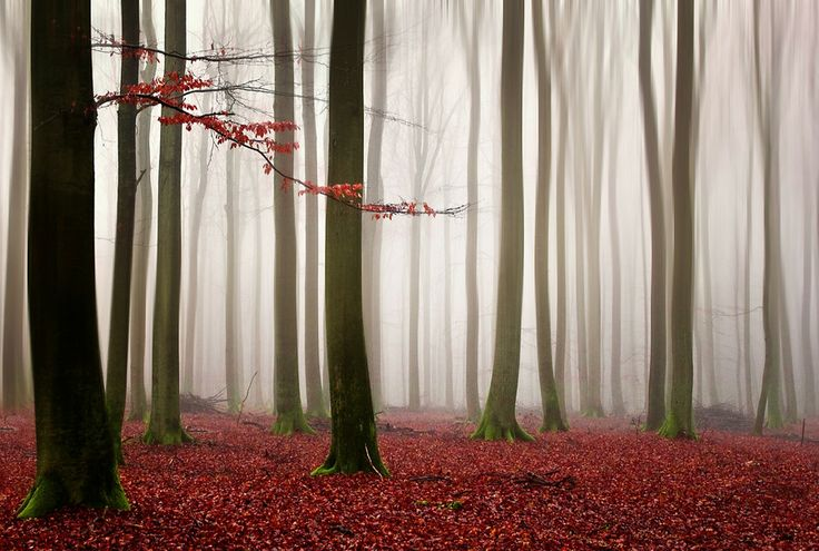 Foggy Forest by Carsten Meyerdierks on 500px
