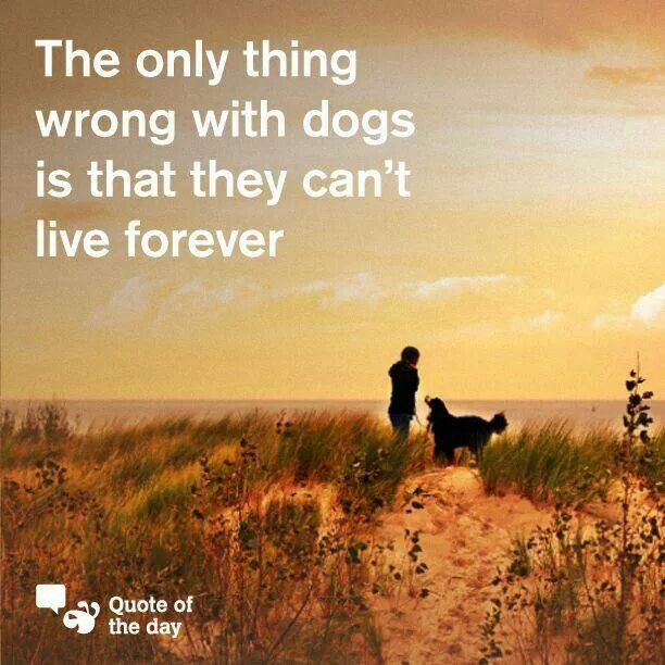 The only thing wrong with dogs...
