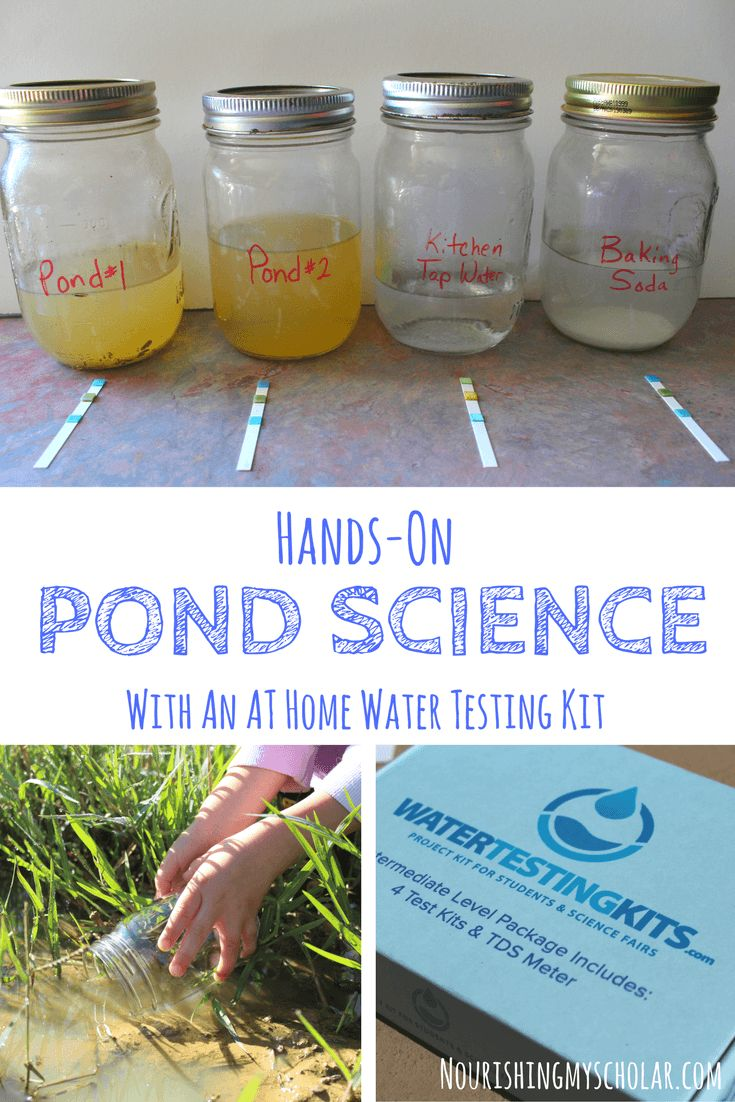 Hands On Pond Science With An At Home Water Testing Kit