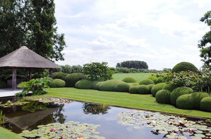 Water lilies in backyard pond, West-Vlaanderen province, Belgium. Architect Stijn Cornilly #garden
