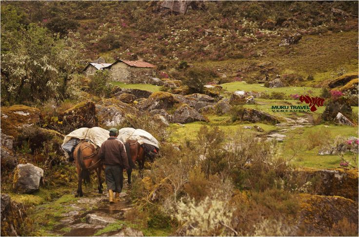 #FelizViernes Viaja por el páramo y conoce los secretos que tiene para tí #viaja #turismo #naturaleza #ecotourism