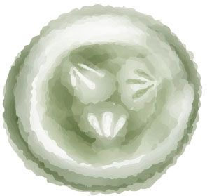 Cucumber. Watercolour illustration by Kate England.