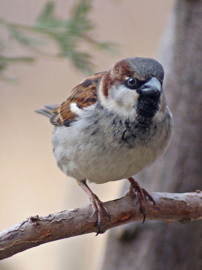 Sparrow by cheryl smith, via 500px~cl