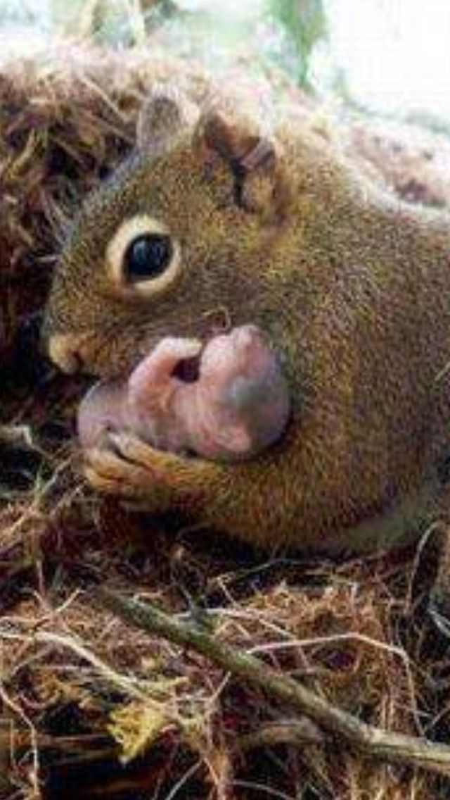 An Awesome Shot ~~Squirrel mom holding her newborn baby!