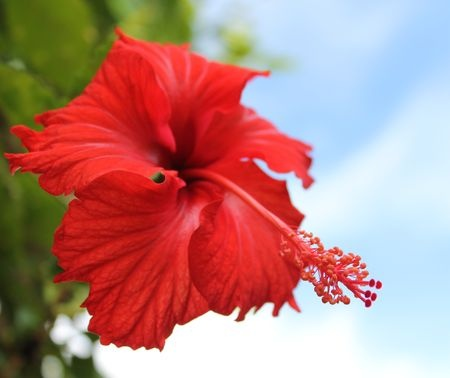 Hibiscus Flower Photo by Julie W. -- National Geographic Your Shot
