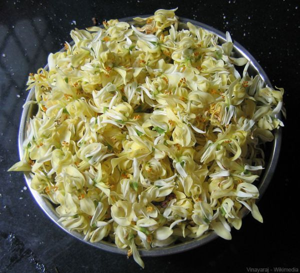 Moringa oleifera Flower - Moringa facts - Moringa oleifera flowers are creamy white with yellow stems. It blooms from April to September. It is edible, mixed into salads or fried in butter and eaten as a snack. Another way is to make delicious tea.