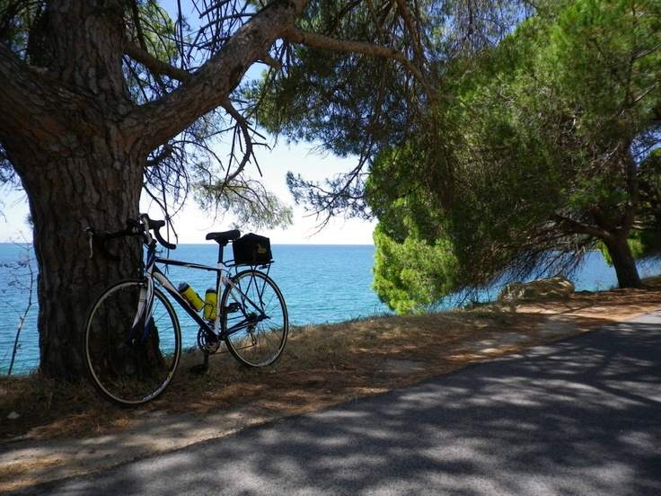 Bicycle under pine tress along the Atlantic coast of Portugal