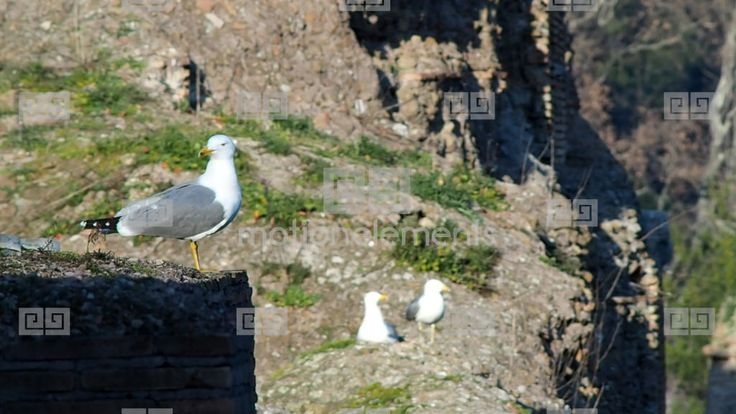 Seagull Stock Video Footage
