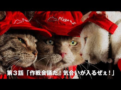 These Pizza Hut cats want to serve and entertain you - CNET