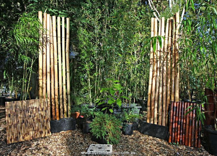 20 Best Images About Backyard Bamboo On Pinterest