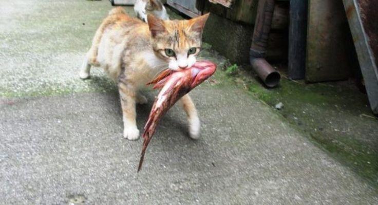 Tolong share – Sahabat tolong share, Kucing ialah salah satu hewan lucu yang begitu menggemaskan. Hewan berbulu ini hidup disekitar lingkungan kita, dan juga biasanya dipelihara oleh manusia, namun tidak jarang mereka juga hidup dengan mencari makan sendiri. Sehingga tidak mengherankan jika keberada
